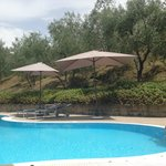 Pool nestled in the olive grove