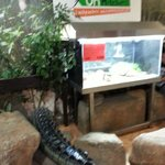 Nice crocodile tail in computing & wireless internet area