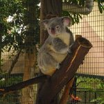 Photo of Kuranda Koala Gardens