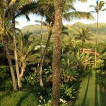 Hanalei Colony Resort resmi