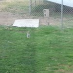 Hotel east side grassy area with bunnies!