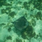 snorkeling with the stingrays!