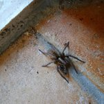 Spider in our room - well, this is nature.