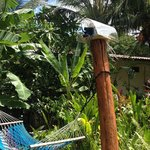 WIFI in the Jungle