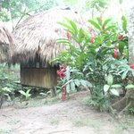 Habitación de Jungle Palace