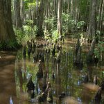 Honey Island Swamp Tours Foto