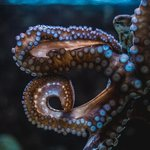 An octopus in one of the marine tanks. Watched this guy/girl for ages!