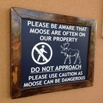 Moose Warning