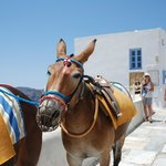 The mules that popped into Oia abruptly!