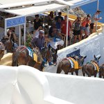 These mules were driven through the center of Oia in the middle of the day!