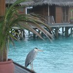 Foto de Meeru Island Resort & Spa
