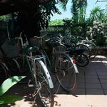 Photo of Botanic Garden Homestay