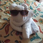 Always a new towel animal!