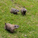 Ground Hogs Off The Back Deck