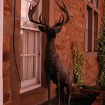 The stag above the front porch