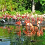 The gorgeous flamingos