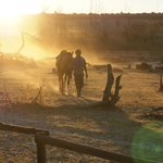 Horizon Horseback Adventures Lodge Foto