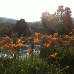 Daylillies surrounding pool..mountains in back