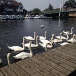 view from terrace of hotel wroxham