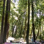 Redwoods River Resort & Campground의 사진