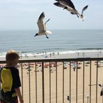 Feeding the seagulls, which came to eat when we tossed bread, then left (they didn't hang around