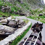 Pony & Trap ride on Gap of Dunlow Trip