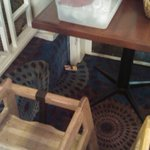 Mouse trap in dining room