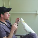 Friendly cockatoos