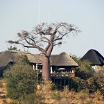 Ngoma Safari Lodge의 사진