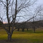 The park-like grounds at Best Western Moore Park, Armidale at sunrise in June; great for walking