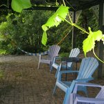 Relax under the grape arbor