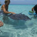 feeding stingrays