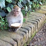 Cultural Trip Monkey Forest