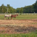 Brudenell Trail Ride Horses