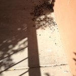piles of bird droppings on the walkways between rooms