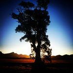 Cazneaux's Tree at Sunset