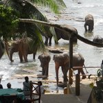 elephants at breakfast