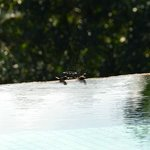 birds taking advantage of the large infinity pool