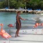 Flamingos on the private island you can feed