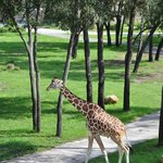 Foto van Disney's Animal Kingdom Villas - Kidani Village