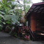 Cape Tribulation Beach House Foto