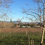 View of their vines in winter - sunny day
