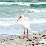 Photo de The Beach on Longboat Key