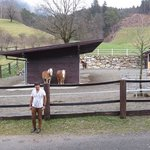 my love imran at his dream stud farm near hotel innsbruk ** must see it