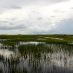 Photo of Everglades National Park Airboats Tour - Miami Japan Tours