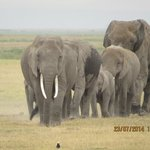Amboseli National Park Foto