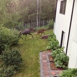 Baby and mother moose reuniting on the last day of our trip