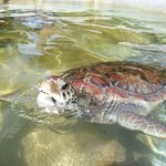 Cayman Turtle Farm: Island Wildlife Encounter Foto