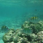 Snorkelling at Grand Bahia Principe Resort