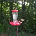 Humming birds from